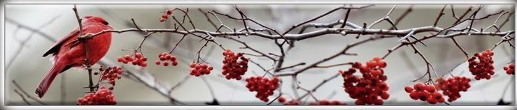 первый снег-птицы-2.jpg