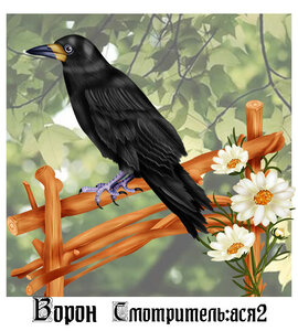 https://img-fotki.yandex.ru/get/880237/196501997.419/0_1a11b8_94ddb079_M.jpg