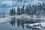 zima-sneg-les-priroda-derevya.jpg