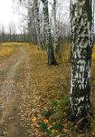 Дорога к лесу