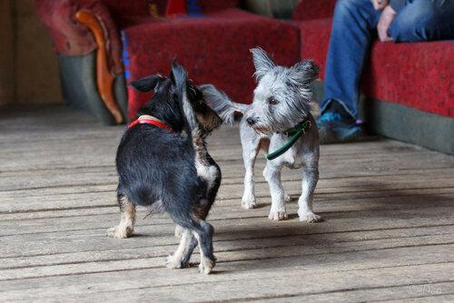 Сержик собака в добрые руки из приюта догпорт