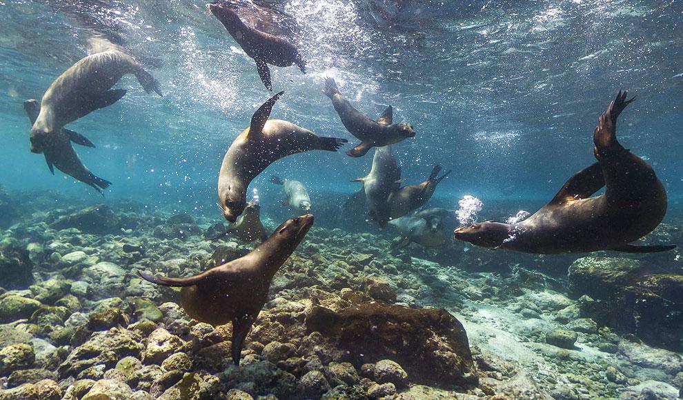 Остров Сомбреро Чино, он находится на юго-восточной оконечности острова Сан-Сальвадо. (Фото AP Photo