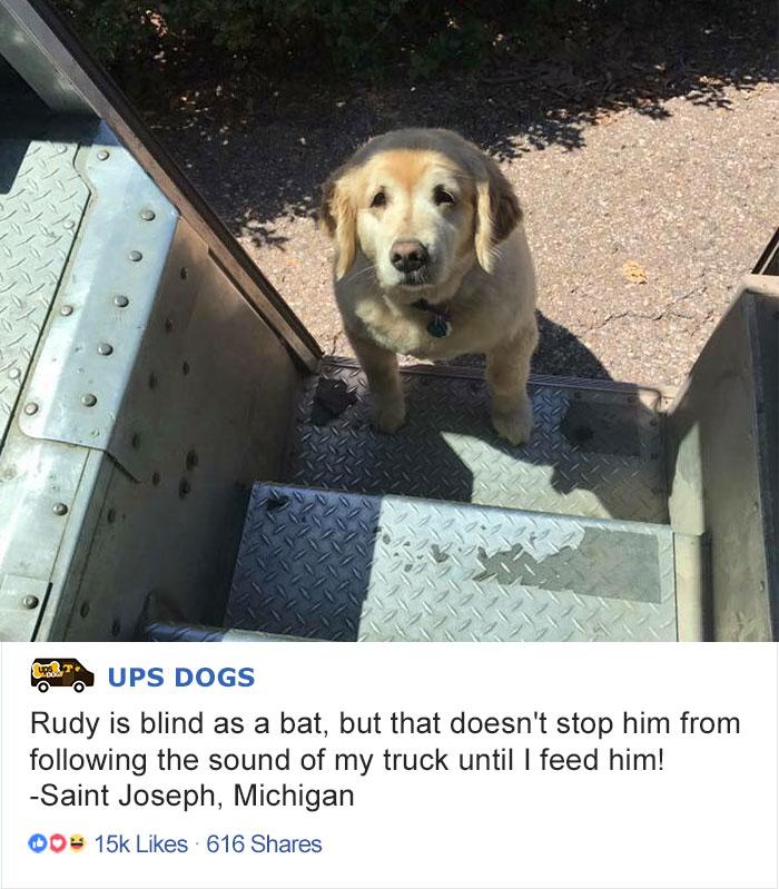 «Руди слеп как летучая мышь, но он все равно следует за звуком моего почтового грузовика, пока не да