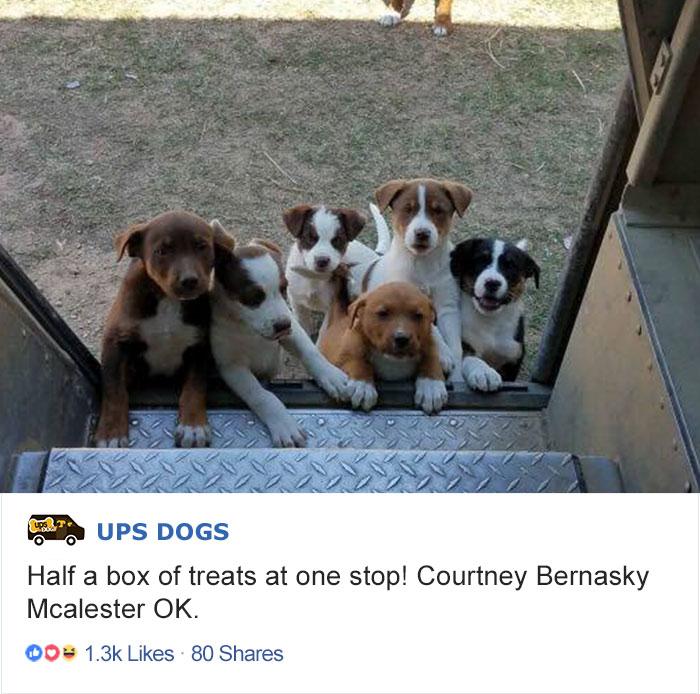 Одна остановка на маршруте — и половины упаковки лакомств для собак как не бывало.