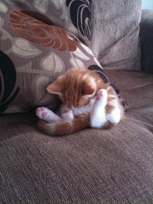 25 кошачьих поз для сна (25 фото)