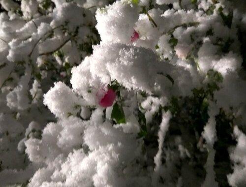 Снег3.jpg