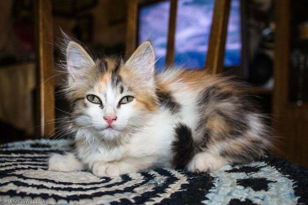 Коты Наташины-28.jpg