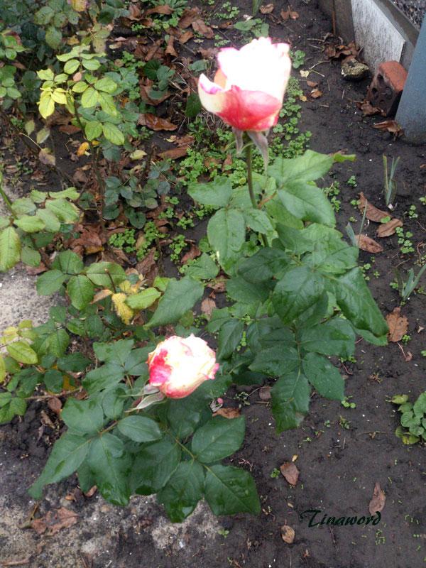 цветы-осени-5.jpg