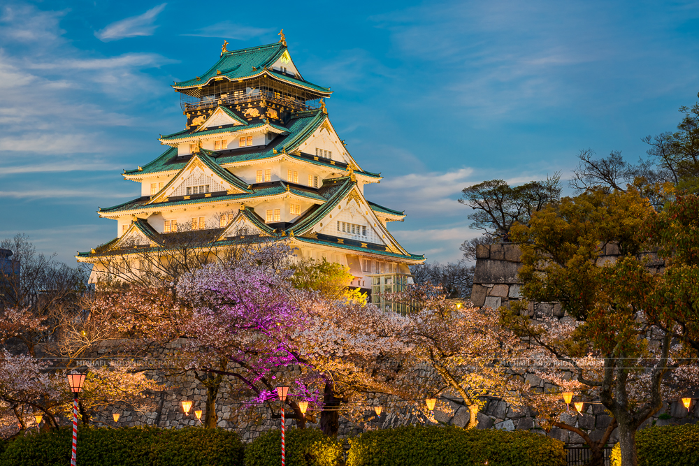 Osaka Castle with cherry trees, Japan