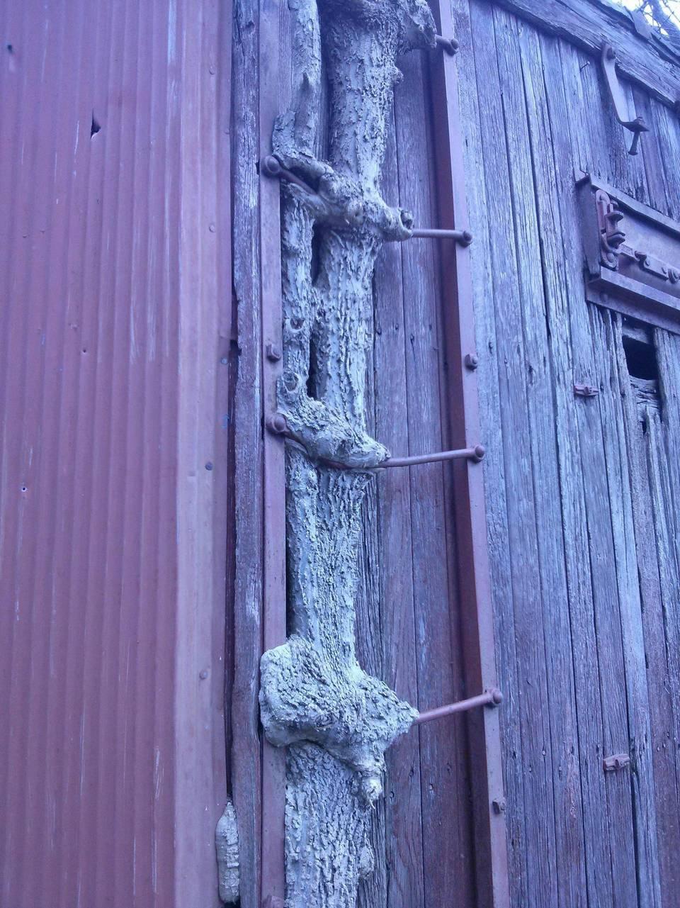 Деревья захватывают окружающие предметы