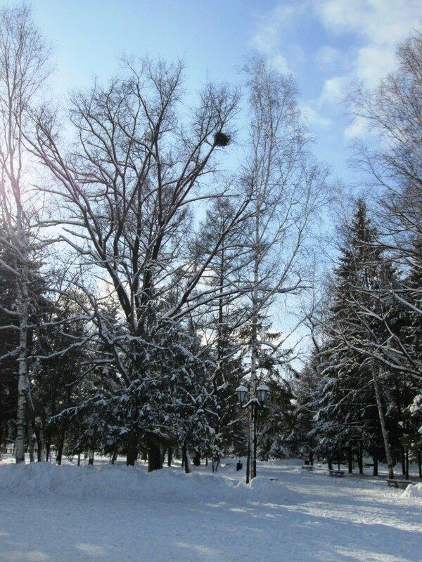 ноябрь. первый снег