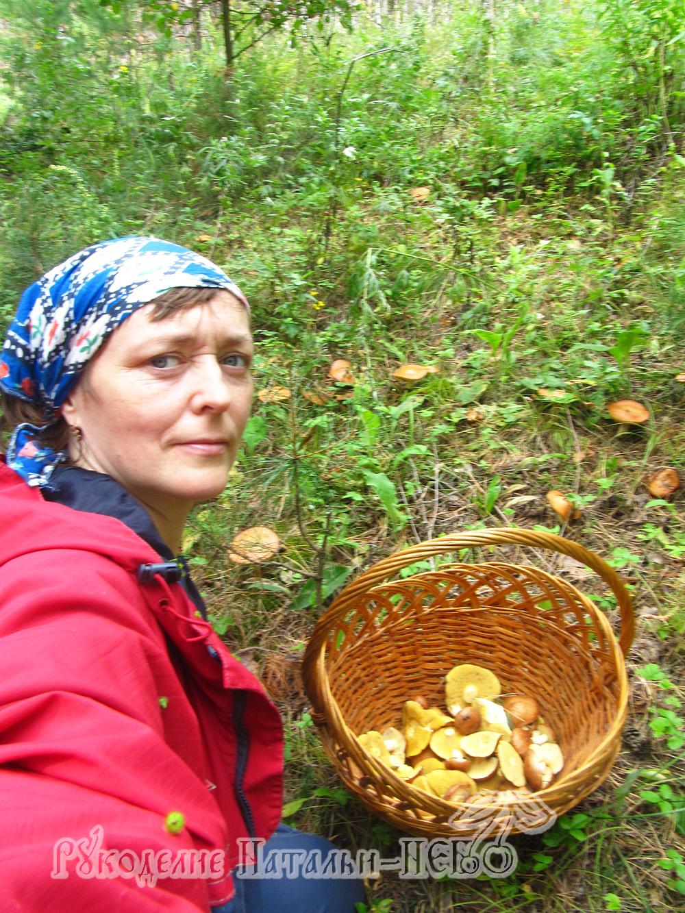 Сибирь лето Сибирь грибы