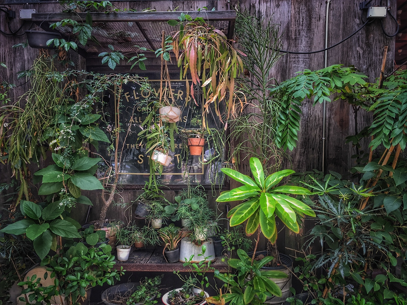 The Curious Little Flower Shoppe / фото Sandip K T