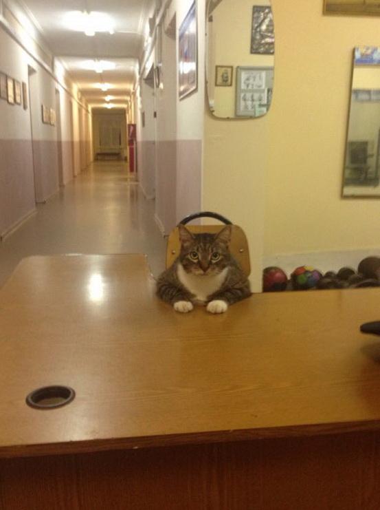 Что будет, если кота назначить вахтёром.