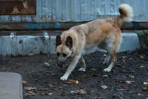 Гаврош Нуар собака из приюта в москве догпорт фото