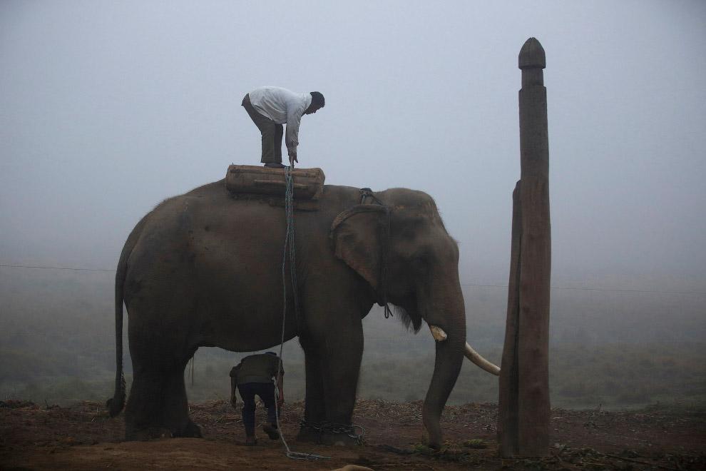 3. Каждого слона готовят к празднику, разрисовывая его кожу цветными мелками. (Фото Navesh Chitrakar