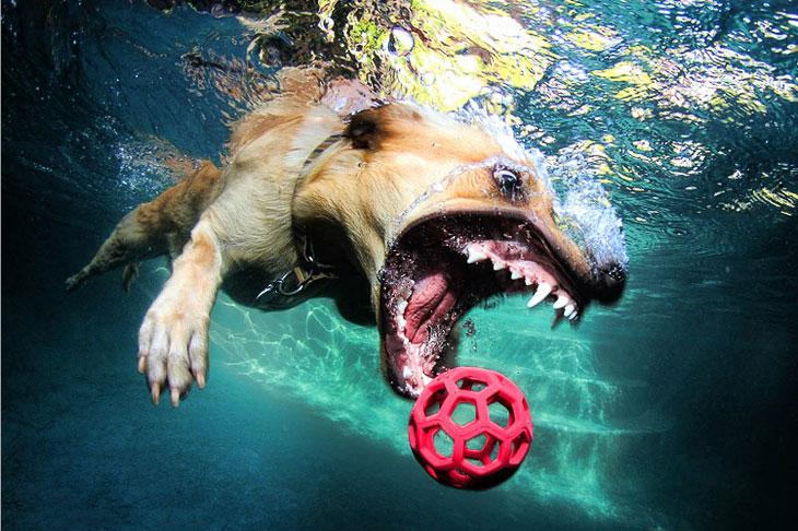 Идея снимать подводных собак пришла к фотографу 2 года назад.