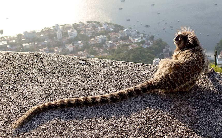 4. Писаный красавец. Снимок улыбающегося крылана из Сингапурского зоопарка.