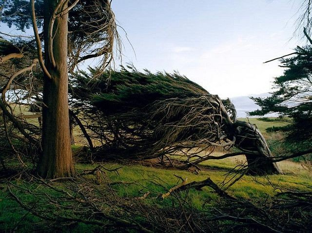 Красота деревья в Новой Зеландии (8 фото)