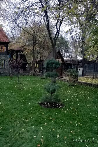 Ландшафтный парк в степи - Страница 2 0_ef074_9f9f953c_L