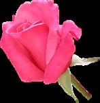 Beautiful Roses #7 (13).png