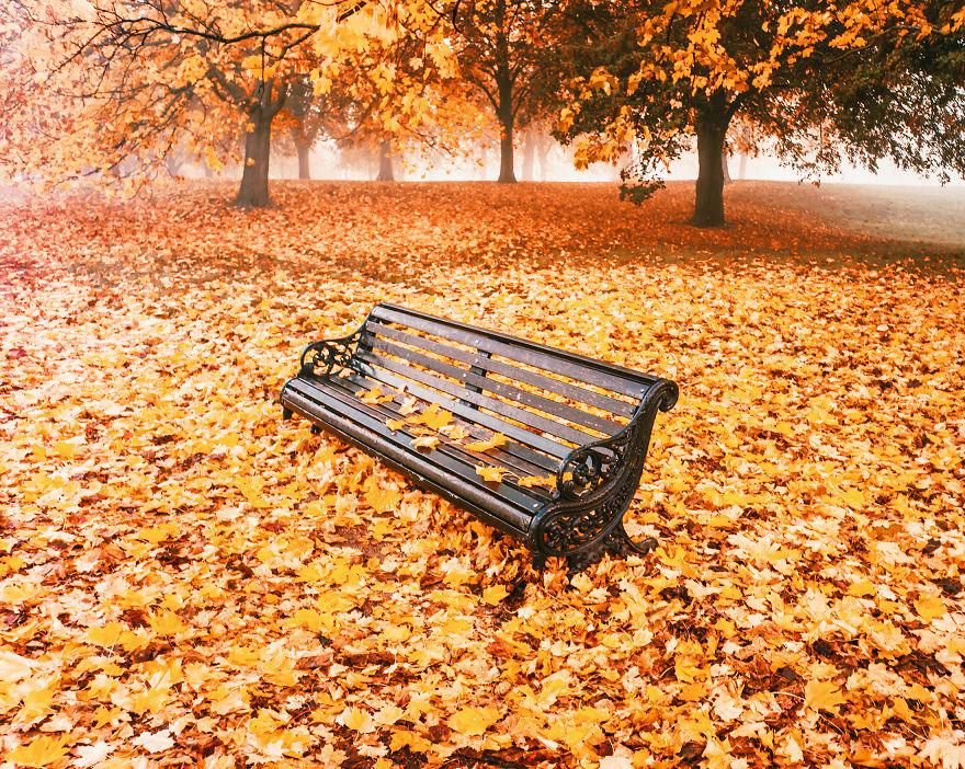 autumn0007-59e7b1d804bcc__880.jpg