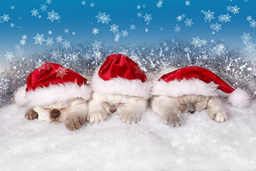 С Новым годом, Новый год, Рождество, Картинка