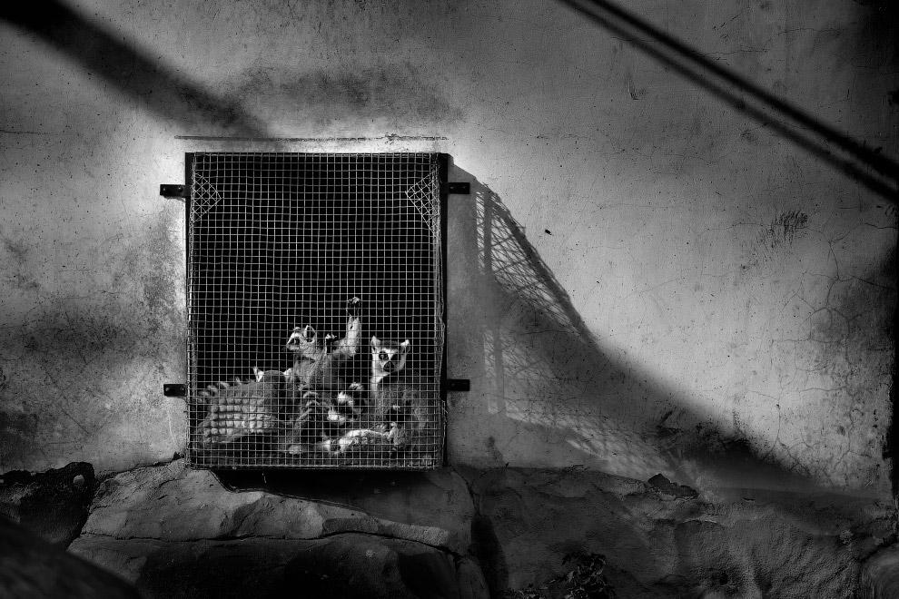 11. Конфискованные ноги носорогов в виде стульев. (Фото Britta Jaschinski | Photographers Against Wi