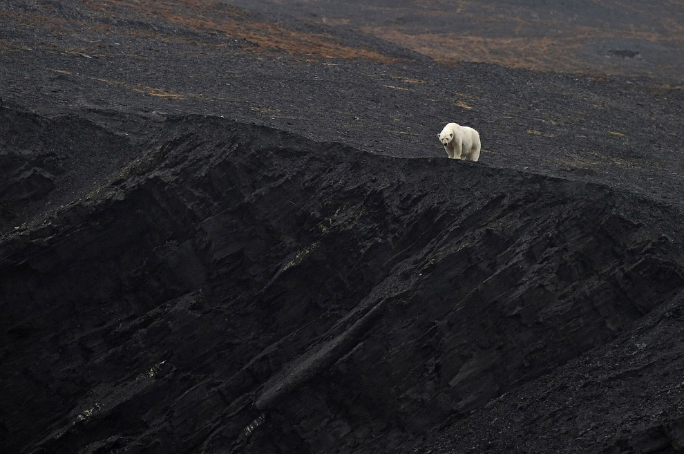 4. Белые гуси. (Фото Sergey Gorshkov | bioGraphic):