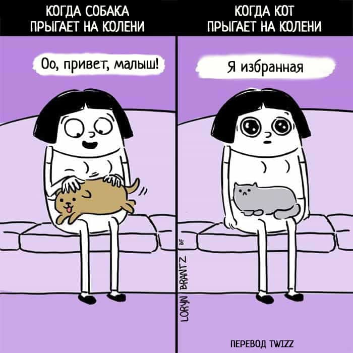 15 отпадных комиксов, которые наглядно покажут вам разницу между котами и собаками