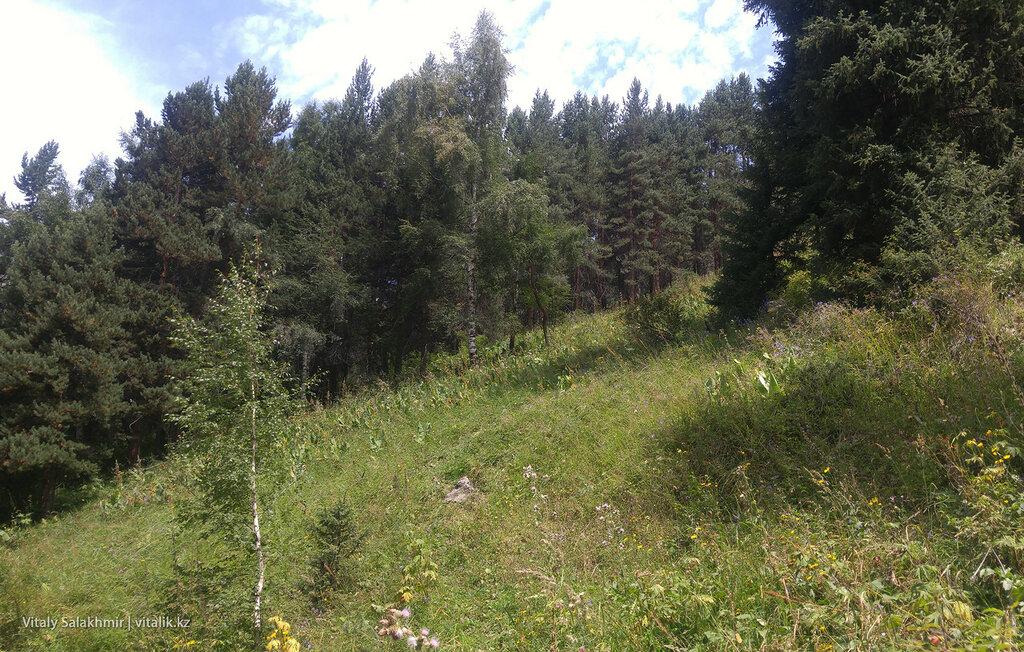 Деревья на склонах гор.