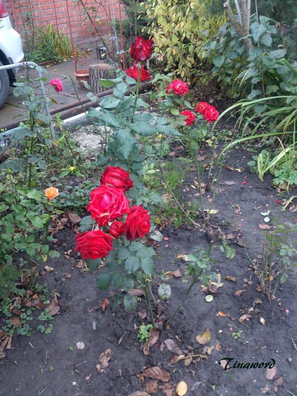 цветы-осени-1.jpg