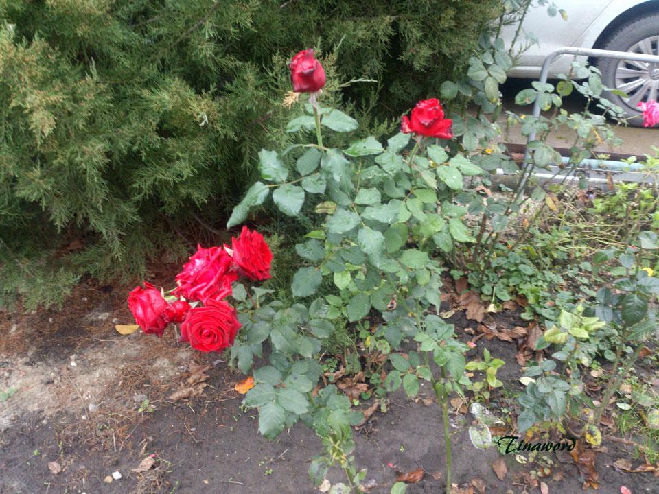 цветы-осени-4.jpg