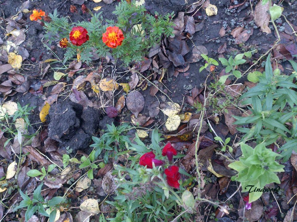 цветы-осени-24.jpg