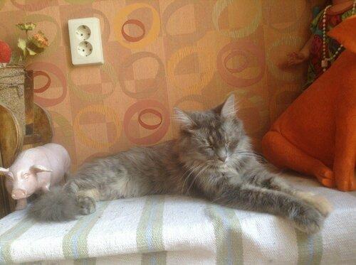 Котица2.jpg