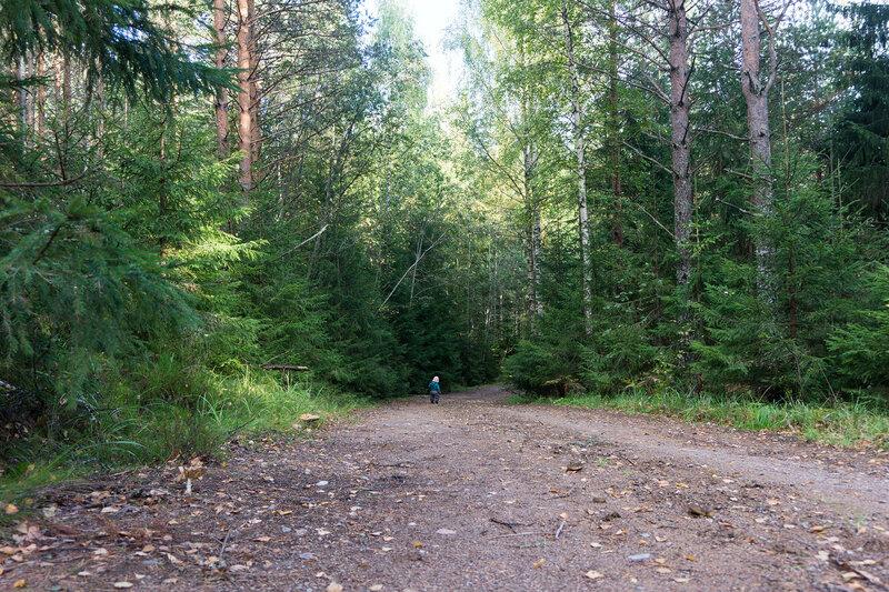 ребенок полтора года сам идет по дороге в лесу