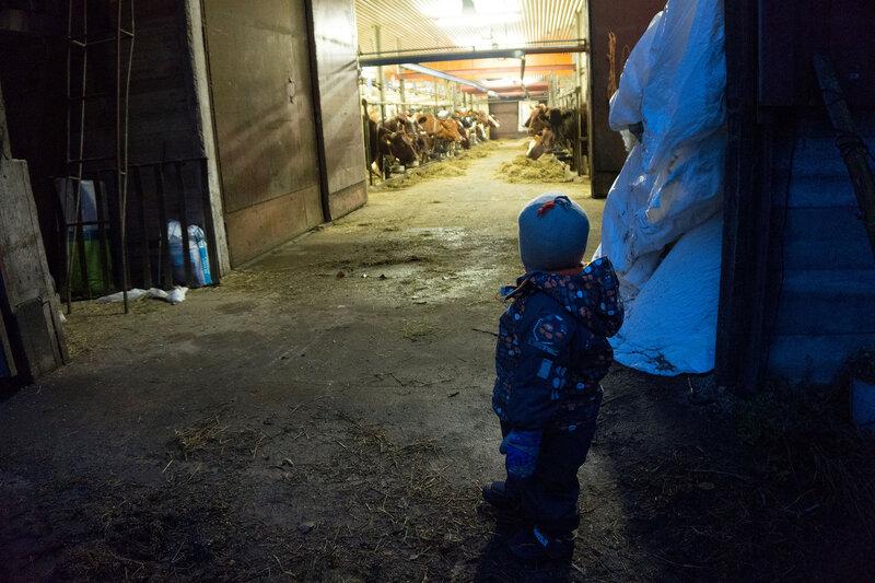 ребенок смотрит на коров