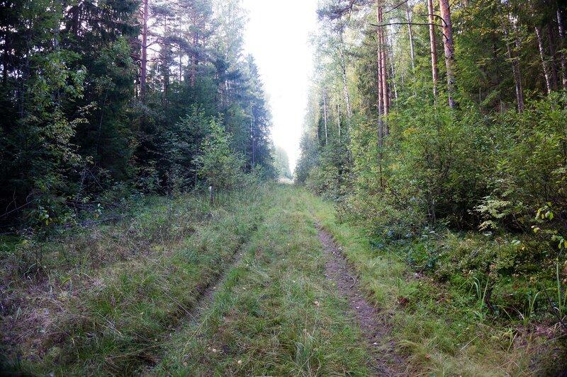 насыпь железной дороги Чудово - Веймарн у Конечки