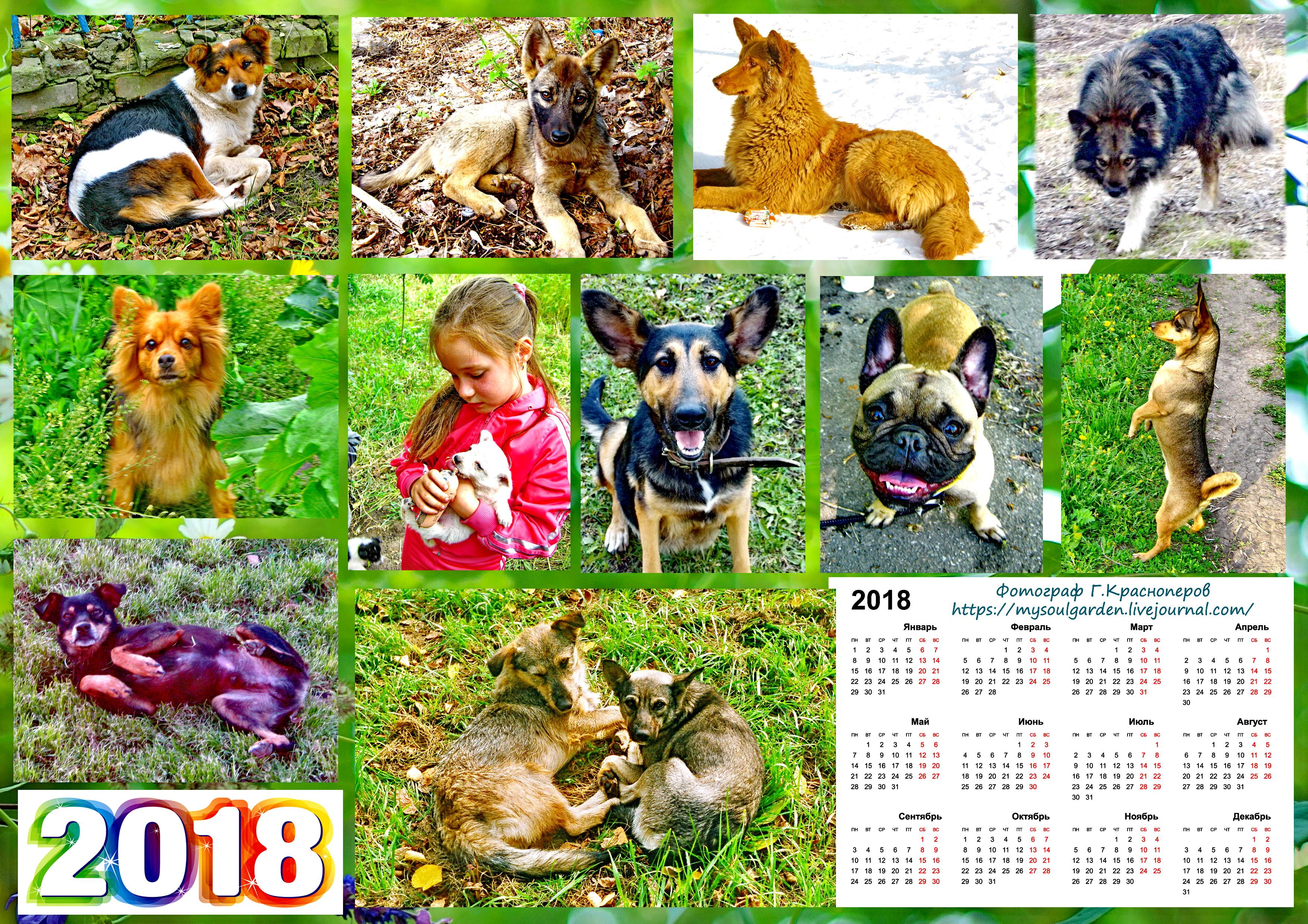 Собаки 2.jpg