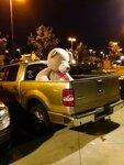 трак для перевозки плюшевых медведей