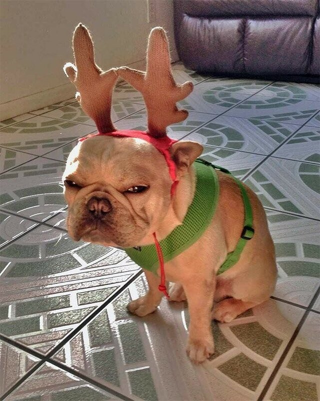 0 17d280 b7ada800 XL - Новогоднее настроение у домашних животных