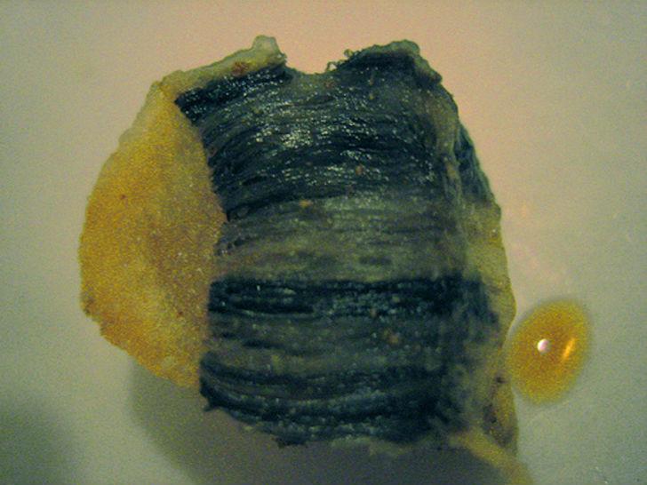 Хвалспик  Хвалспик означает «китовый жир». Его варят и коптят в молочной кислоте. Сч