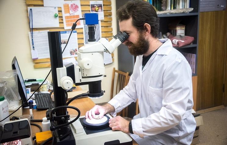Палеонтологи Томского государственного университета (ТГУ) изучили первое найденное в России яйцо дин