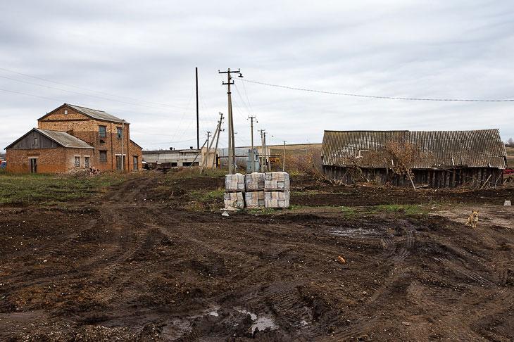 За год с небольшим рядом с колхозными руинами возвели новые коровники — аккуратные, практичные: