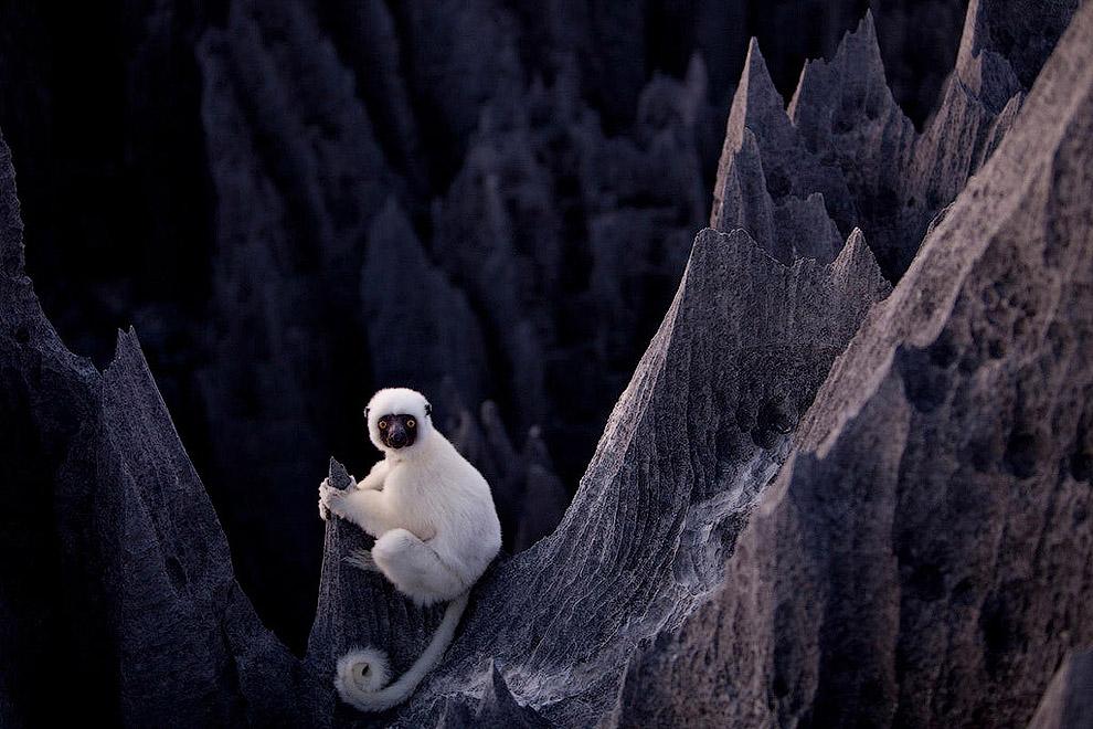 Вариантов полюбоваться на красоту «каменного леса» на Мадагаскаре немного: с обзорных площадок: