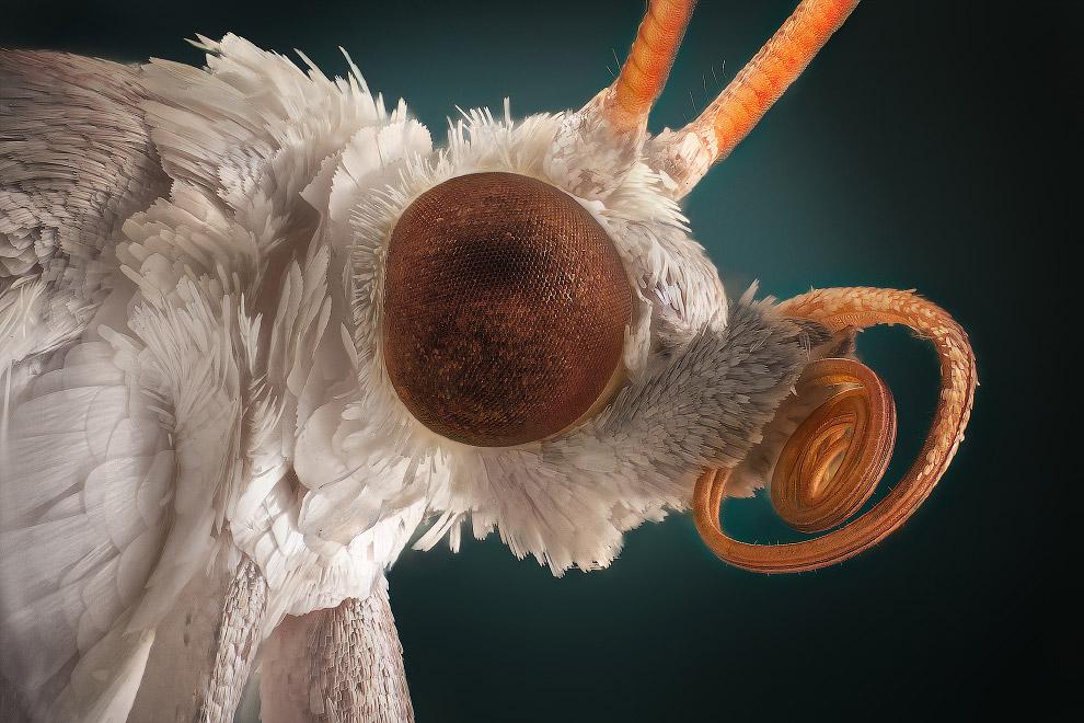 8. Самец комара. Не пьет.
