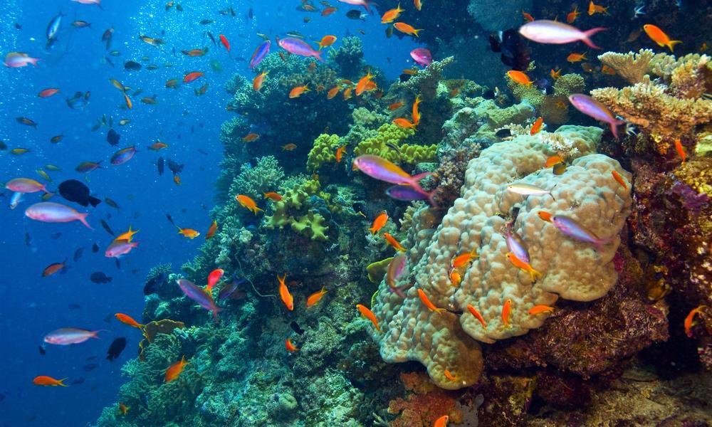 1. Ученые нашли способ восстановить поврежденные участки Большого Барьерного рифа.