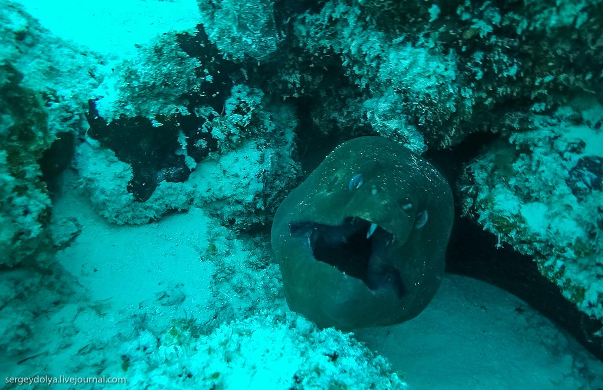 Стальные акваланги: как мы плавали с муренами