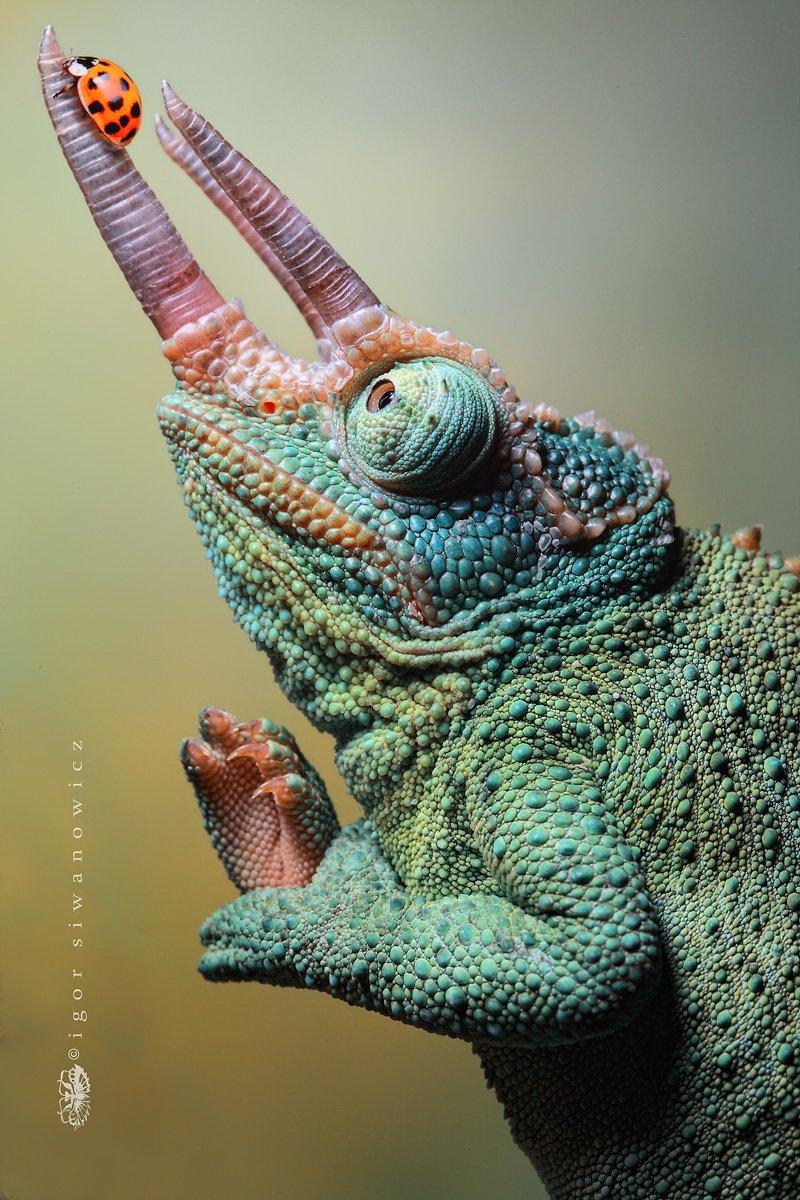 Хвост скорпиона: