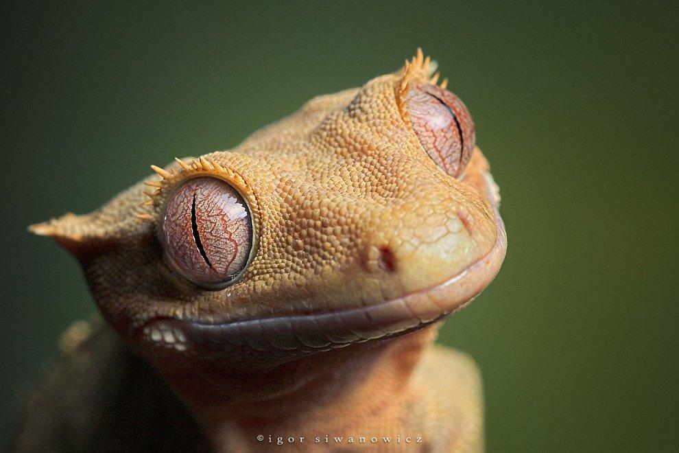 Глаз дракона: